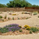 pollinator basins