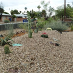 cactus mound