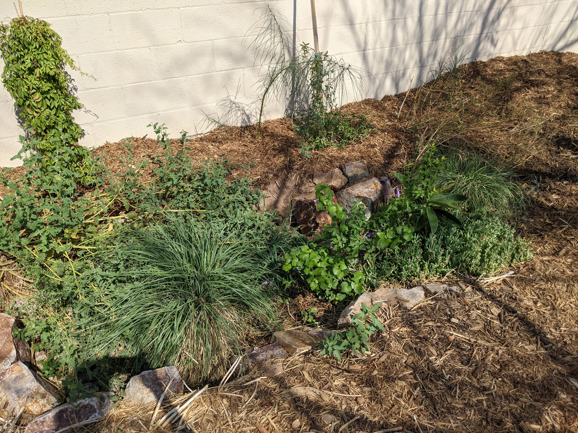 basin plants irrigated with laundry greywater
